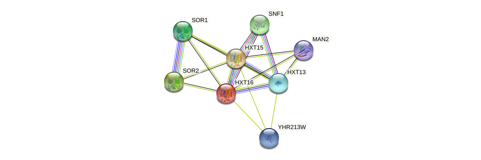HXT16 protein (Saccharomyces cerevisiae) - STRING interaction network