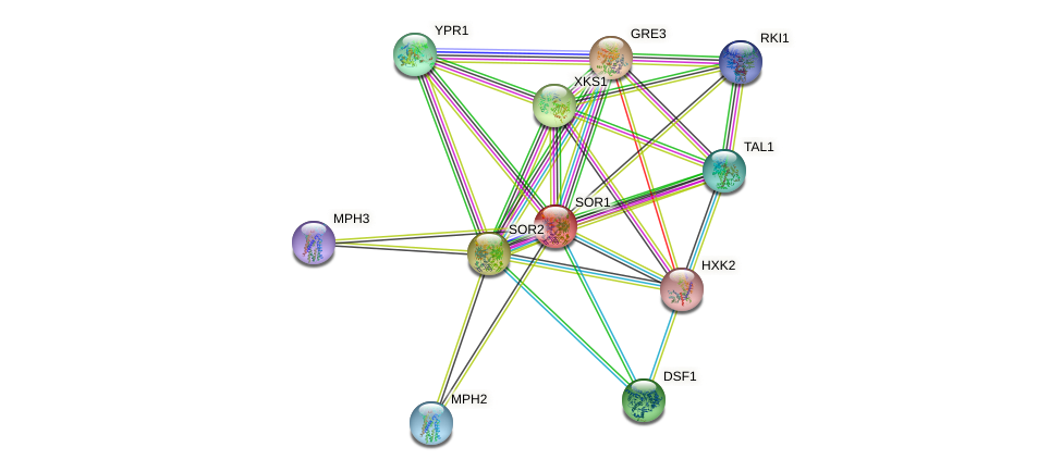 SOR1 protein (Saccharomyces cerevisiae) - STRING interaction network