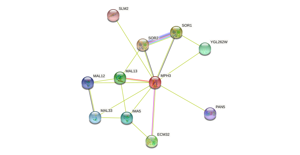MPH3 protein (Saccharomyces cerevisiae) - STRING interaction network