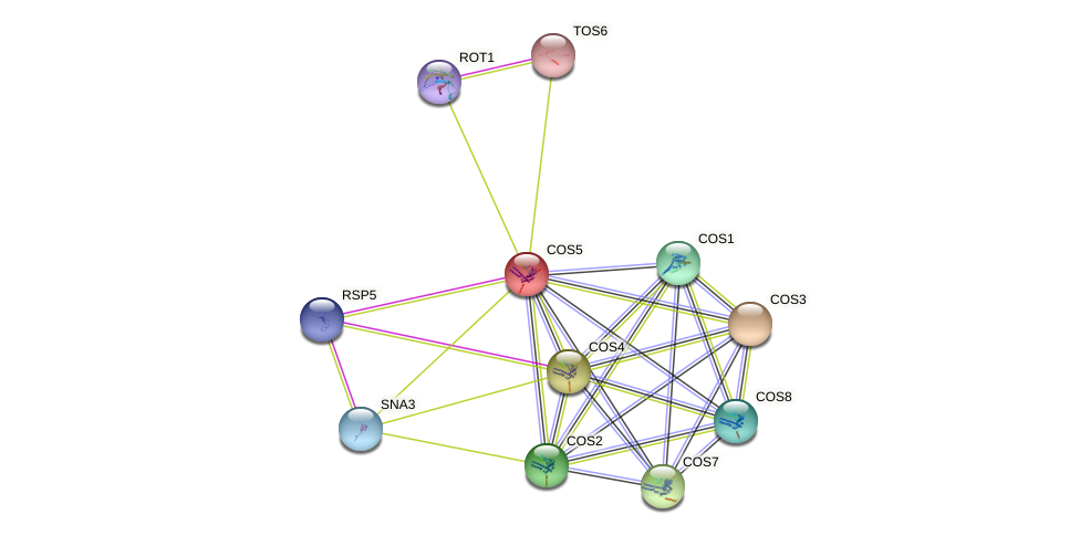 COS5 protein (Saccharomyces cerevisiae) - STRING interaction network