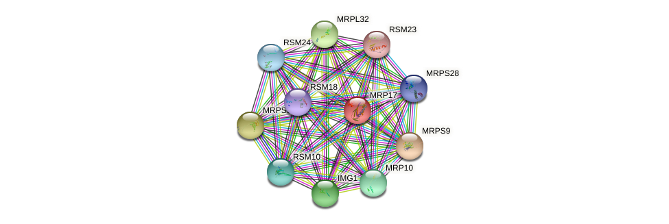 MRP17 protein (Saccharomyces cerevisiae) - STRING interaction network