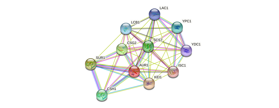AUR1 protein (Saccharomyces cerevisiae) - STRING interaction network
