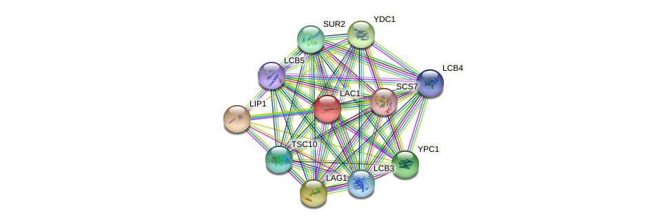 LAC1 protein (Saccharomyces cerevisiae) - STRING interaction network