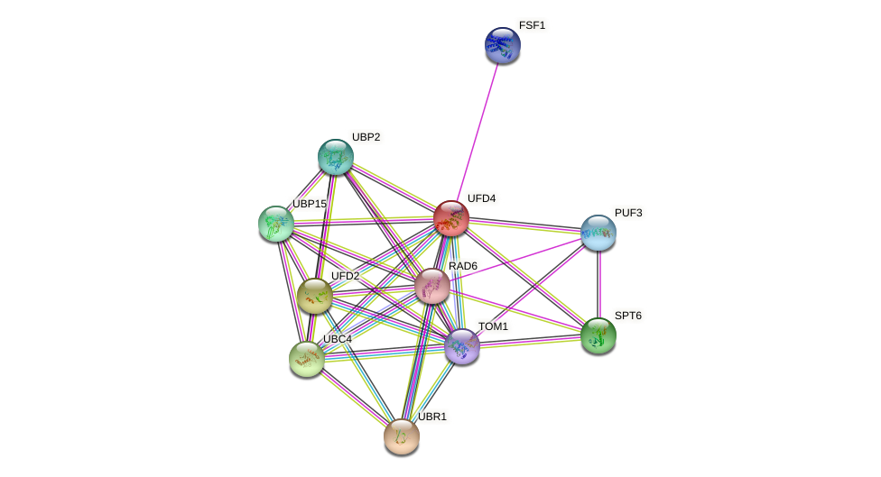 UFD4 protein (Saccharomyces cerevisiae) - STRING interaction network
