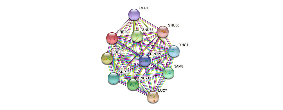 PRP40 protein (Saccharomyces cerevisiae) - STRING interaction network
