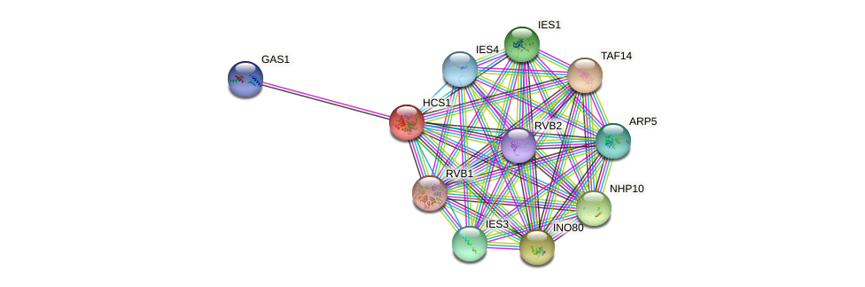 HCS1 protein (Saccharomyces cerevisiae) - STRING interaction network