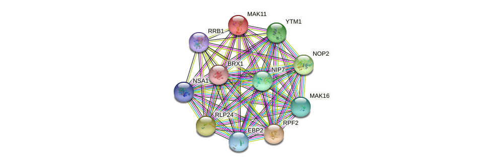 MAK11 protein (Saccharomyces cerevisiae) - STRING interaction network