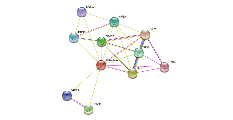 YKL023W protein (Saccharomyces cerevisiae) - STRING interaction network