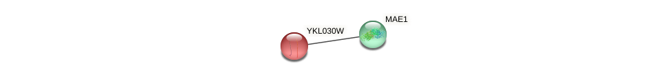 YKL030W protein (Saccharomyces cerevisiae) - STRING interaction network