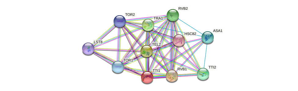 TTI1 protein (Saccharomyces cerevisiae) - STRING interaction network