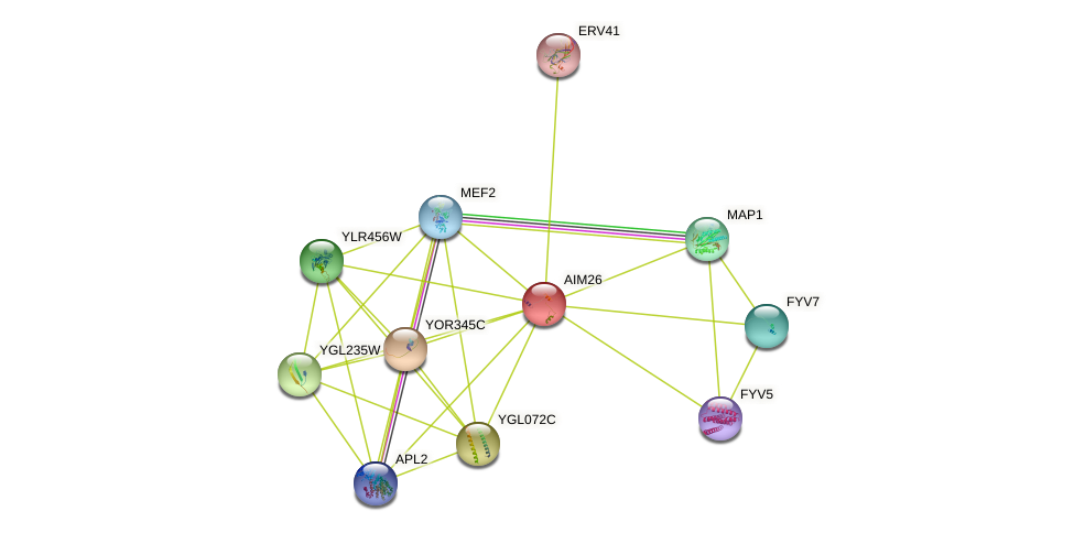 AIM26 protein (Saccharomyces cerevisiae) - STRING interaction network
