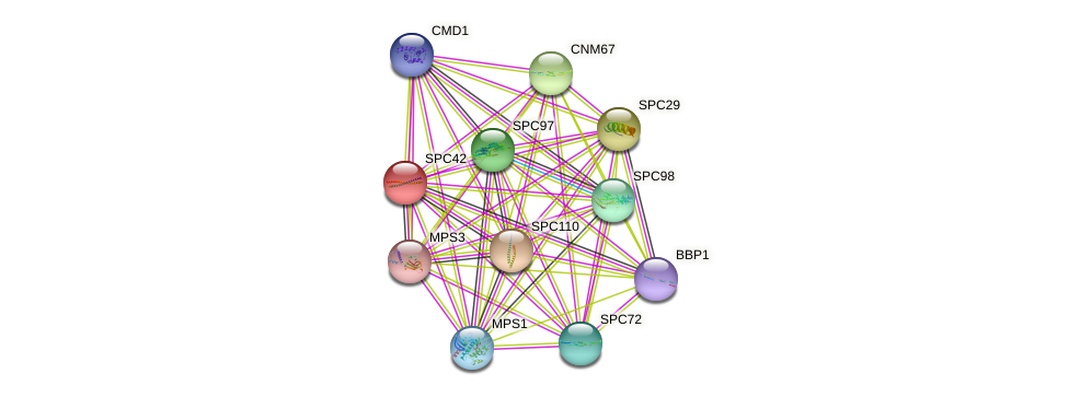 SPC42 protein (Saccharomyces cerevisiae) - STRING interaction network