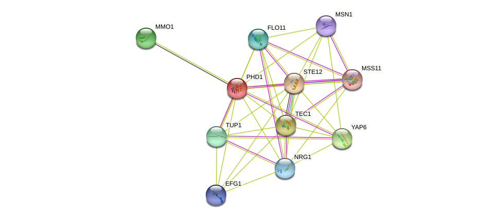 PHD1 protein (Saccharomyces cerevisiae) - STRING interaction network