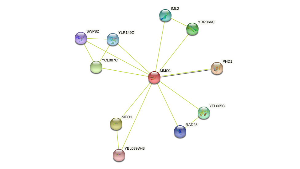 MMO1 protein (Saccharomyces cerevisiae) - STRING interaction network