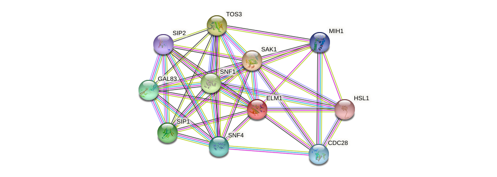 ELM1 protein (Saccharomyces cerevisiae) - STRING interaction network