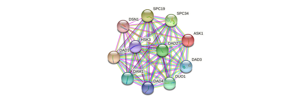 ASK1 protein (Saccharomyces cerevisiae) - STRING interaction network