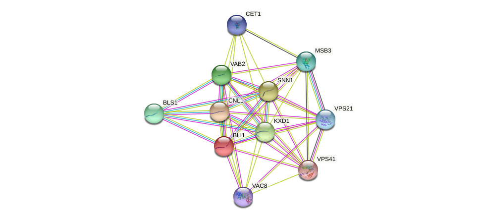 BLI1 protein (Saccharomyces cerevisiae) - STRING interaction network