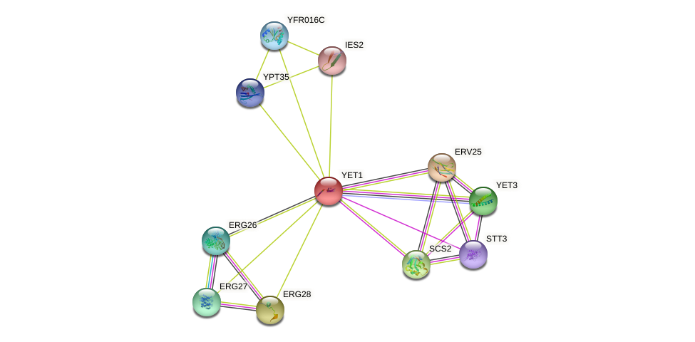 YET1 protein (Saccharomyces cerevisiae) - STRING interaction network