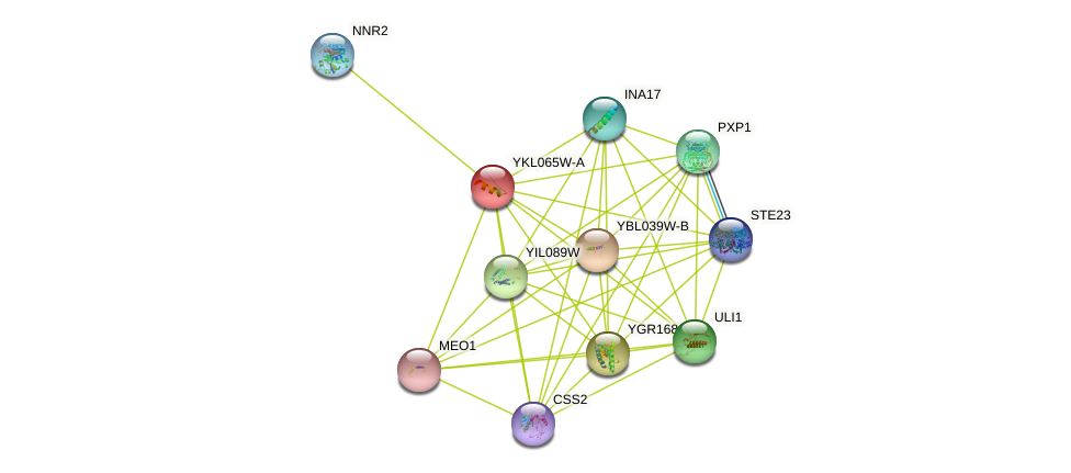 YKL065W-A protein (Saccharomyces cerevisiae) - STRING interaction network