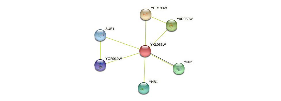 YKL066W protein (Saccharomyces cerevisiae) - STRING interaction network