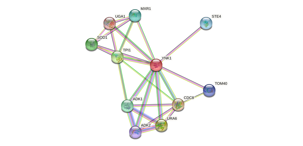 YNK1 protein (Saccharomyces cerevisiae) - STRING interaction network