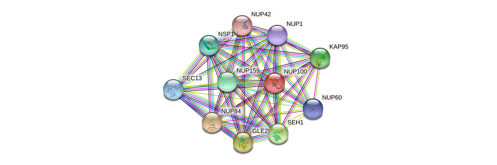 NUP100 protein (Saccharomyces cerevisiae) - STRING interaction network