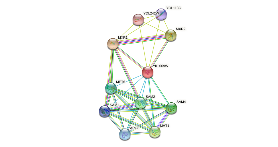 YKL069W protein (Saccharomyces cerevisiae) - STRING interaction network