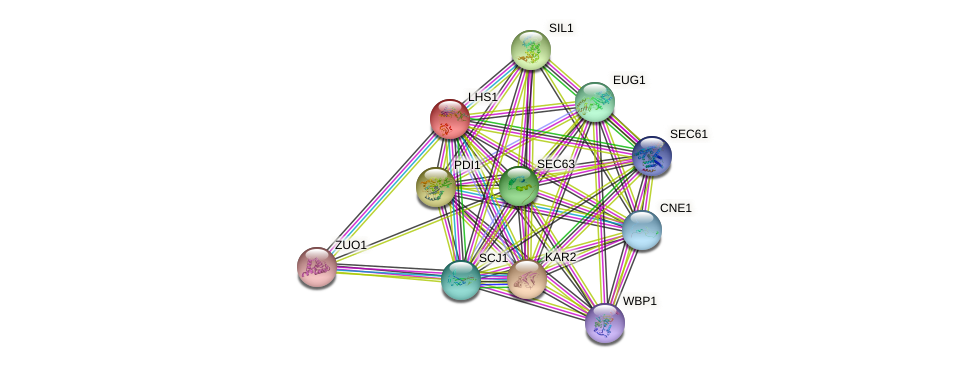 LHS1 protein (Saccharomyces cerevisiae) - STRING interaction network