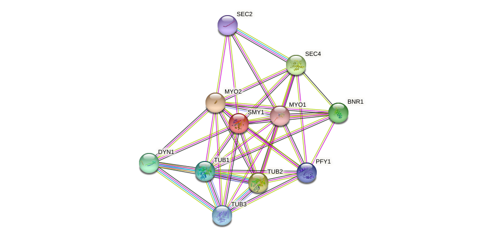 SMY1 protein (Saccharomyces cerevisiae) - STRING interaction network