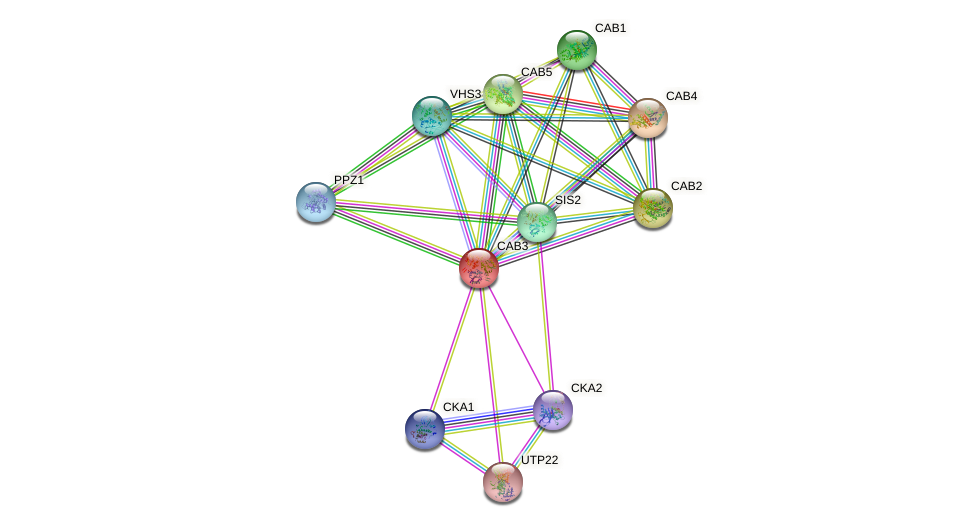 CAB3 protein (Saccharomyces cerevisiae) - STRING interaction network
