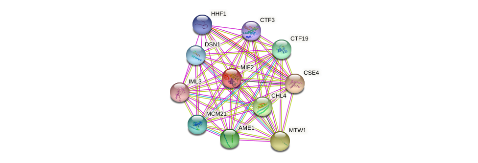 MIF2 protein (Saccharomyces cerevisiae) - STRING interaction network