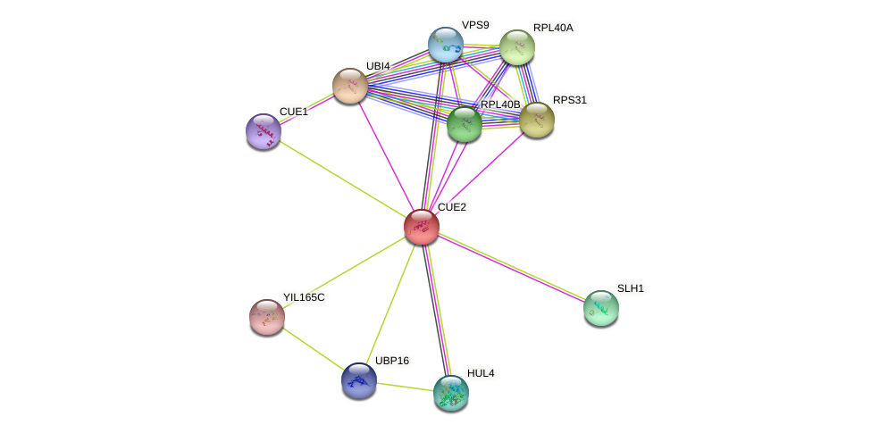CUE2 protein (Saccharomyces cerevisiae) - STRING interaction network