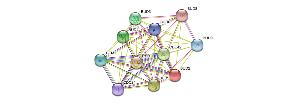 BUD2 protein (Saccharomyces cerevisiae) - STRING interaction network