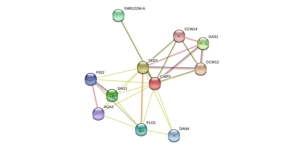 CWP2 protein (Saccharomyces cerevisiae) - STRING interaction network