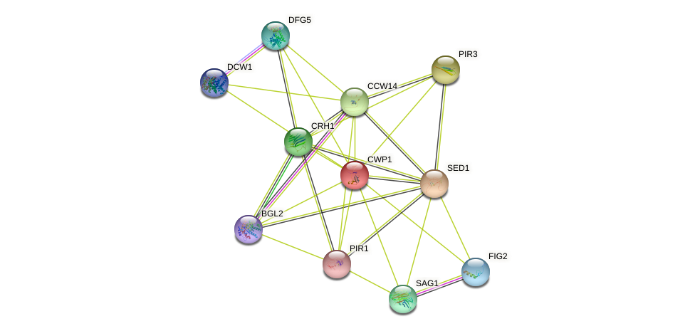 CWP1 protein (Saccharomyces cerevisiae) - STRING interaction network