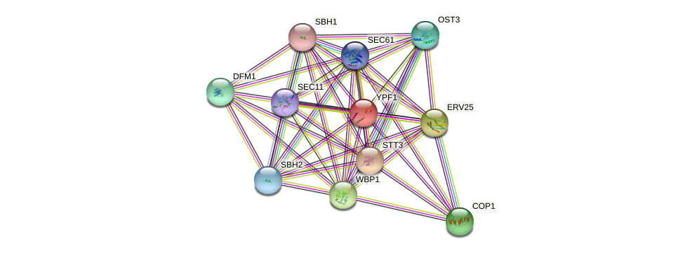 YPF1 protein (Saccharomyces cerevisiae) - STRING interaction network