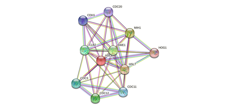 HSL1 protein (Saccharomyces cerevisiae) - STRING interaction network