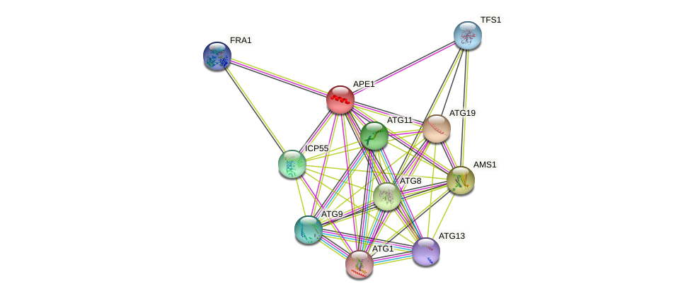 APE1 protein (Saccharomyces cerevisiae) - STRING interaction network