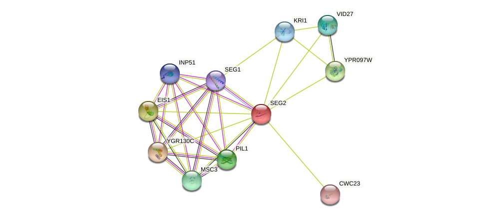 SEG2 protein (Saccharomyces cerevisiae) - STRING interaction network