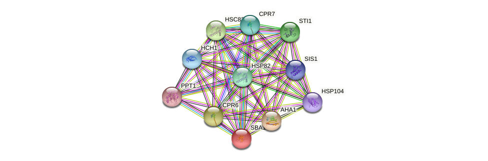SBA1 protein (Saccharomyces cerevisiae) - STRING interaction network