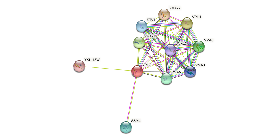VPH2 protein (Saccharomyces cerevisiae) - STRING interaction network
