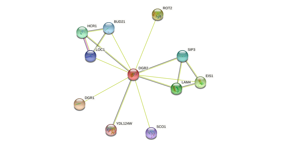 DGR2 protein (Saccharomyces cerevisiae) - STRING interaction network