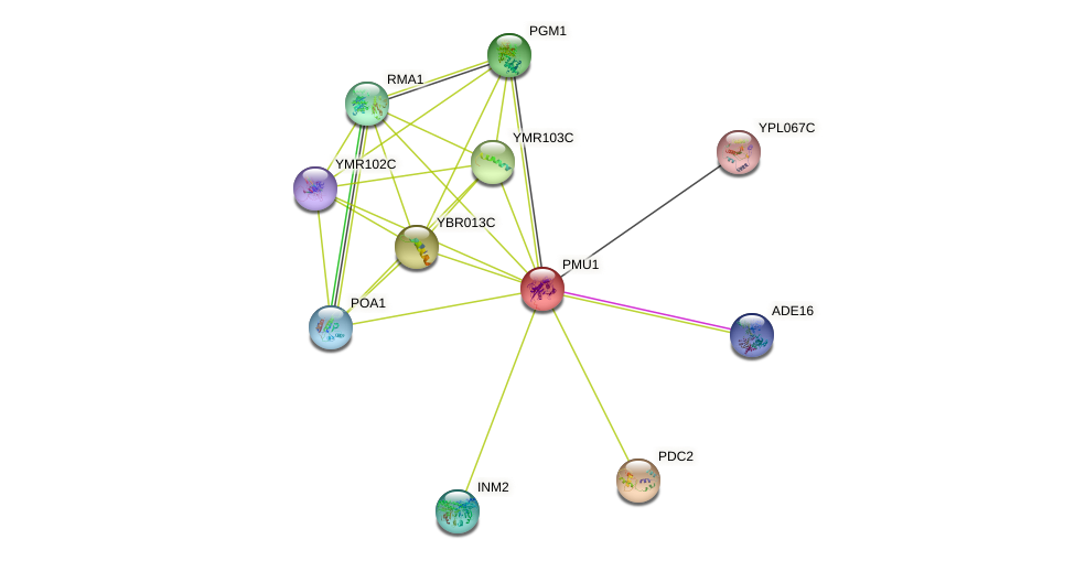 PMU1 protein (Saccharomyces cerevisiae) - STRING interaction network