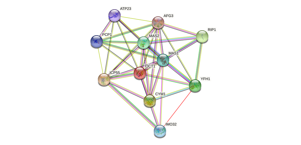 OCT1 protein (Saccharomyces cerevisiae) - STRING interaction network