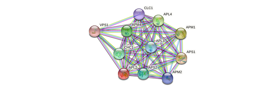 APL2 protein (Saccharomyces cerevisiae) - STRING interaction network