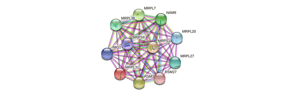 MRPL31 protein (Saccharomyces cerevisiae) - STRING interaction network