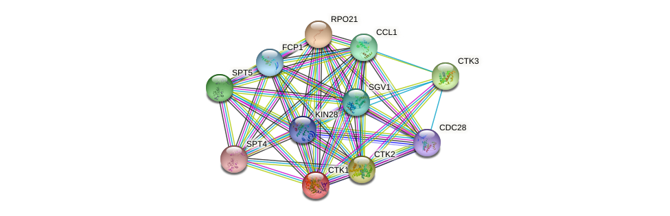 CTK1 protein (Saccharomyces cerevisiae) - STRING interaction network