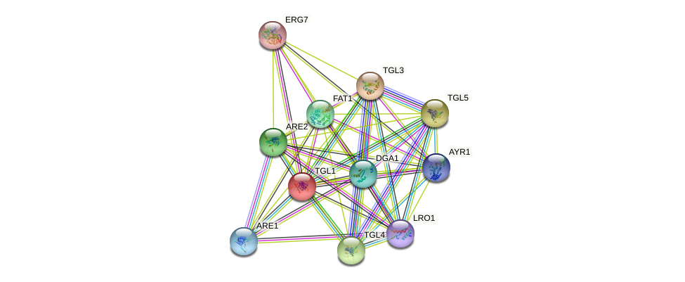 TGL1 protein (Saccharomyces cerevisiae) - STRING interaction network