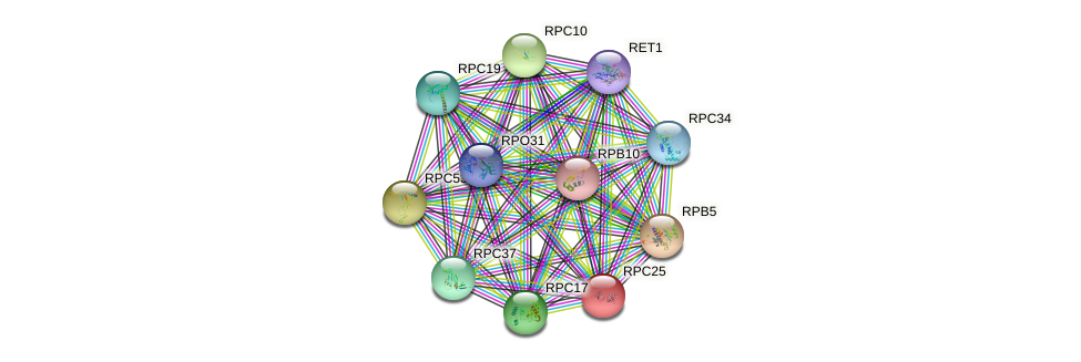 RPC25 protein (Saccharomyces cerevisiae) - STRING interaction network