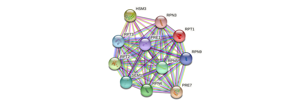 RPT1 protein (Saccharomyces cerevisiae) - STRING interaction network
